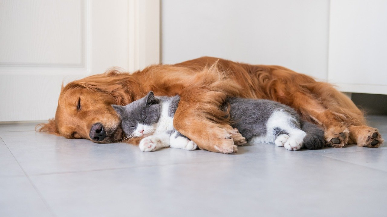 best kitchen flooring for pets